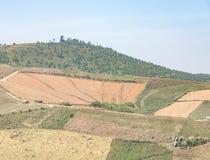 Azienda agricola asciutta del cereale Immagine Stock