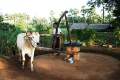 Azienda agricola Burmese Fotografie Stock