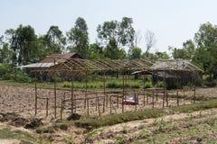 Azienda agricola cambogiana Immagine Stock