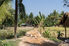 Azienda agricola cambogiana Fotografie Stock