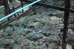 Azienda agricola cambogiana del coccodrillo Immagini Stock Libere da Diritti
