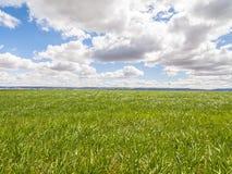 Azienda agricola, campo del raccolto. paesaggio con erba verde. Agricoltura della Spagna. Fotografie Stock Libere da Diritti