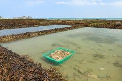 Azienda agricola Cancale dell'ostrica Fotografia Stock Libera da Diritti