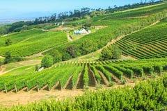 Azienda agricola Cape Town della serra di viti Immagine Stock Libera da Diritti