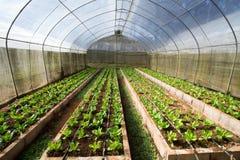 Azienda agricola chiusa di verdure Fotografia Stock Libera da Diritti