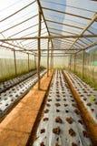 Azienda agricola chiusa di verdure Fotografia Stock