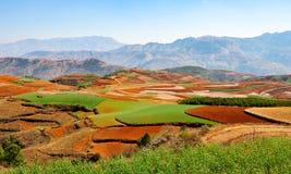 Azienda agricola cinese del terrazzo con suolo rosso Fotografia Stock