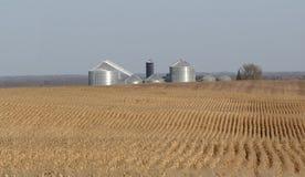 Azienda agricola circostante del campo di mais Immagini Stock Libere da Diritti