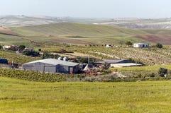 Azienda agricola con il campo di mais e le vigne Fotografia Stock