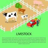 Azienda agricola con informazioni del testo e del bestiame qui sotto illustrazione di stock
