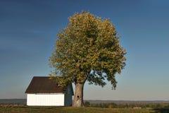 Azienda agricola con l'albero Fotografia Stock