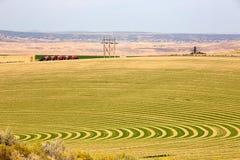 Azienda agricola con la piantatura contornata per l'irrigazione del perno Fotografie Stock Libere da Diritti