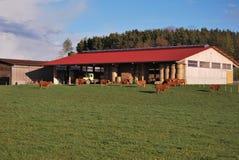 Azienda agricola con le mucche fotografia stock