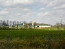 Azienda agricola con le mucche sceniche Fotografia Stock Libera da Diritti