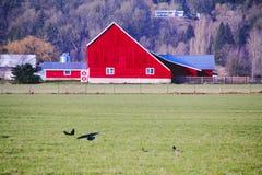 Azienda agricola contemporanea Fotografia Stock Libera da Diritti