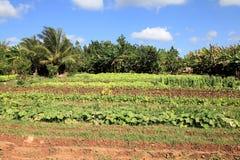 Azienda agricola in Cuba Fotografie Stock Libere da Diritti