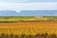 Azienda agricola d'autunno dell'uva della frutta N Immagini Stock