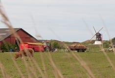 Azienda agricola in Danimarca con un mulino a vento Fotografia Stock Libera da Diritti