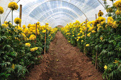 Azienda agricola dei fiori Fotografie Stock Libere da Diritti