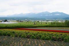 Azienda agricola dei fiori a Sapporo, Giappone Fotografie Stock