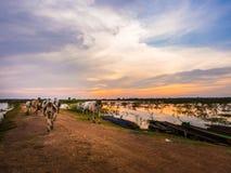 Azienda agricola del bufalo e della mucca in paese Fotografia Stock Libera da Diritti