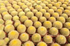 Azienda agricola del cactus Fotografie Stock Libere da Diritti