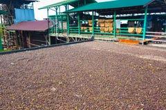 Azienda agricola del caffè Fotografia Stock Libera da Diritti