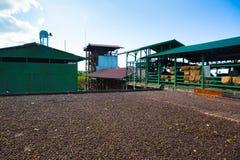 Azienda agricola del caffè Fotografia Stock