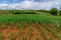 Azienda agricola del campo di mais su paese Fotografie Stock