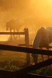 Azienda agricola del cavallo Fotografia Stock Libera da Diritti