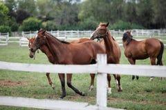 Azienda agricola del cavallo Immagini Stock