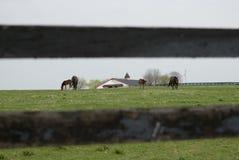 Azienda agricola del cavallo del Kentucky Fotografie Stock Libere da Diritti