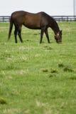 Azienda agricola del cavallo del Kentucky Immagini Stock