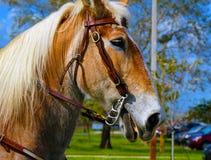 Azienda agricola del cavallo Head Fotografia Stock Libera da Diritti