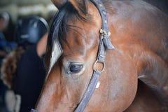 Azienda agricola del cavallo Head fotografie stock libere da diritti
