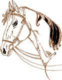 Azienda agricola del cavallo Head Immagine Stock