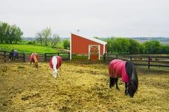 Azienda agricola del cavallo nell'area rurale di Wisconsin Fotografie Stock