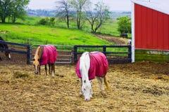 Azienda agricola del cavallo nell'area rurale di Wisconsin Fotografia Stock