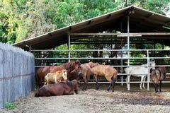 Azienda agricola del cavallo, svago, famiglie nelle zone rurali immagine stock