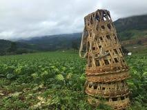 Azienda agricola del cavolo con il canestro di bambù fotografia stock