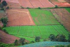 Azienda agricola del cavolo sulla montagna Immagini Stock Libere da Diritti