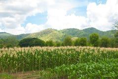 Azienda agricola del cereale sulla montagna Fotografia Stock Libera da Diritti