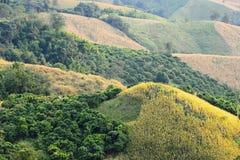 Azienda agricola del cereale sulla montagna Immagine Stock Libera da Diritti