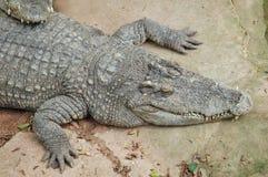 Azienda agricola del coccodrillo, Tailandia Fotografia Stock Libera da Diritti