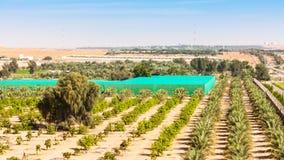 Azienda agricola del deserto vicino ad Al Ain Fotografia Stock