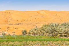 Azienda agricola del deserto vicino ad Al Ain Fotografie Stock