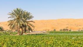 Azienda agricola del deserto vicino ad Al Ain nei UAE Fotografie Stock