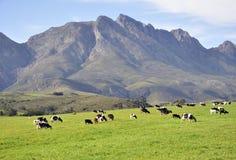Azienda agricola del diario. Fotografie Stock