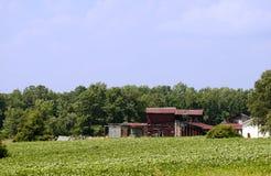 Azienda agricola del fagiolo della soia Fotografia Stock Libera da Diritti