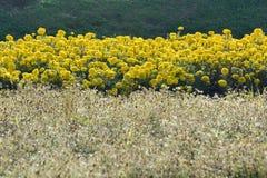 Azienda agricola del fiore Fotografia Stock Libera da Diritti